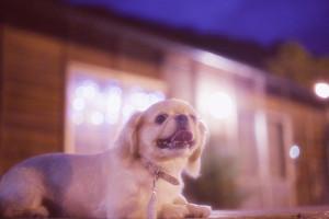 夏の夜の撮影会サンブル写真